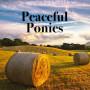 Peaceful Ponies